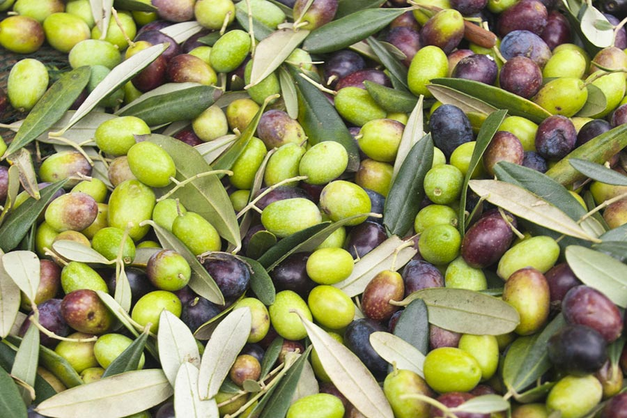 COme usare l'olio d'oliva sulla pelle